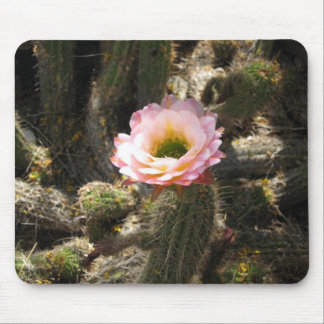 Pink Cactus Flower Mouse Pad