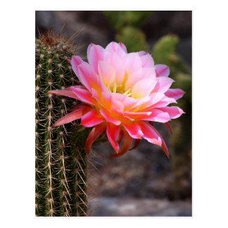 pink cactus flower postcard