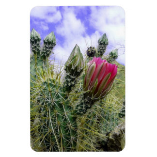 Pink Cactus Flower Rectangle Magnets