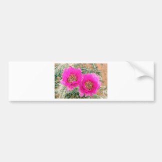Pink Cactus flowers in bloom Bumper Sticker