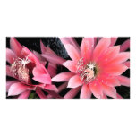 Pink Cactus Flowers Photo Card