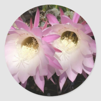 Pink Cactus Flowers Sticker