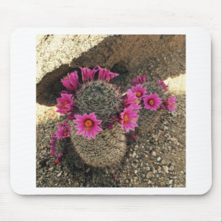 Pink Cactus in Bloom Mouse Pad