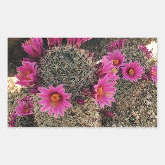 Pink Cactus in Bloom Rectangular Sticker