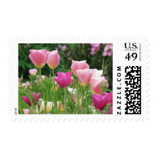 Pink Californian Poppies Postage
