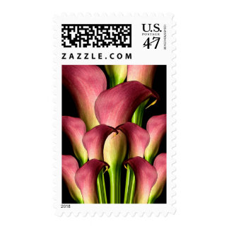 Pink Calla Event And Wedding Postage Stamp