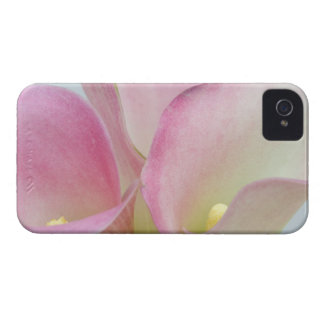 Pink Calla Lilies iPhone 4 Case-Mate Cases