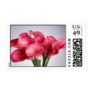Pink Calla Lilies Postage Stamp