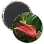 Pink Calla Lily Elegant Floral Photography Magnet