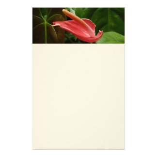 Pink Calla Lily Elegant Floral Photography Stationery