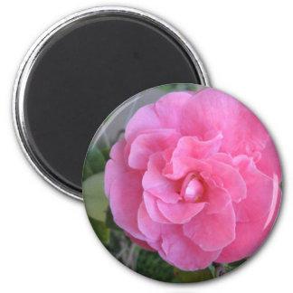 Pink Camelia Blossom Refrigerator Magnets