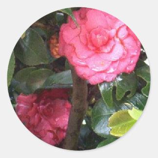 Pink Camelia de Costa Rica Classic Round Sticker