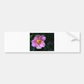 Pink Camelia Flower Bumper Stickers