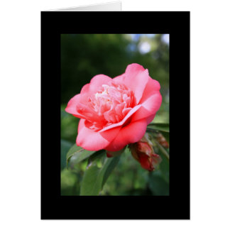 Pink Camelia Flower Greeting Card and Note Card