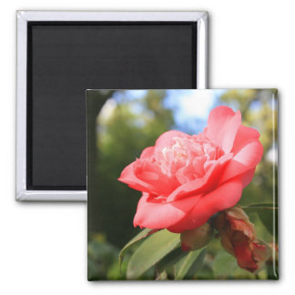 Pink Camelia Flower Magnet