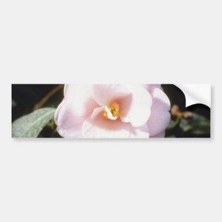 Pink Camelia Japonica 'Fleur De Pecher' (Japanese Bumper Sticker
