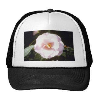 Pink Camelia Japonica 'Fleur De Pecher' (Japanese Mesh Hat