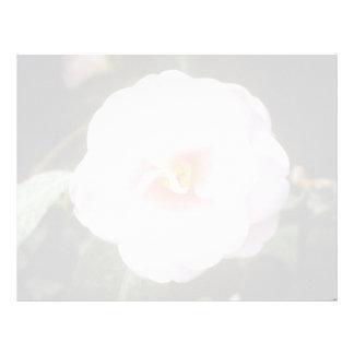 Pink Camelia Japonica 'Fleur De Pecher' (Japanese Letterhead