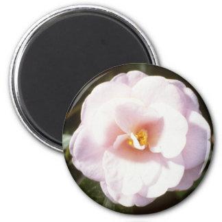 Pink Camelia Japonica Fleur De Pecher Japanese Magnet
