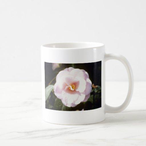 Pink Camelia Japonica 'Fleur De Pecher' (Japanese Coffee Mugs