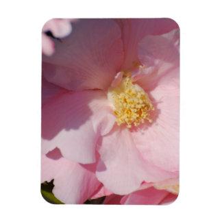 Pink Camelia Magnet