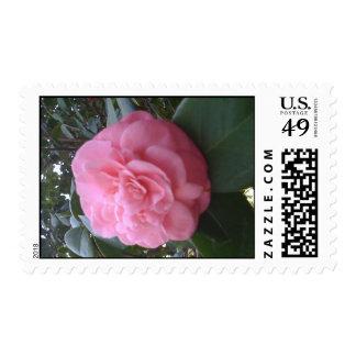 Pink Camelia Stamp