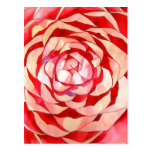 Pink Camellia abstract original art painting Post Card
