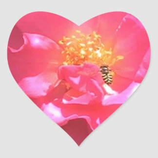 Pink Camellia and bee Stickers