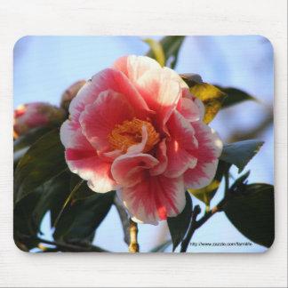 Pink Camellia Blossom mousepad