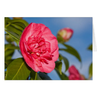 Pink Camellia Card