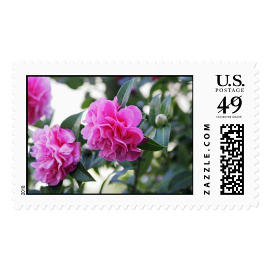 Pink Camellia (Double Flowered) Postage