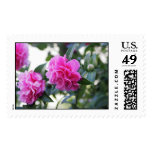 Pink Camellia (Double Flowered) Stamp
