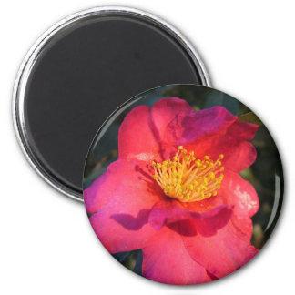 pink camellia flower magnet