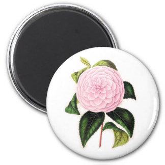 Pink Camellia Magnet