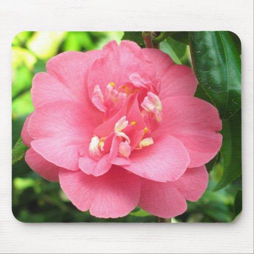 Pink Camellia Mousepad