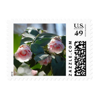 Pink Camellia Photo Postage Stamp