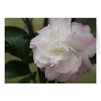 Pink Camellia Photography Card