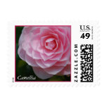 Pink Camellia Postage