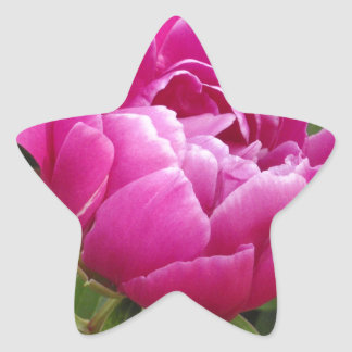 Pink Camellia Sticker