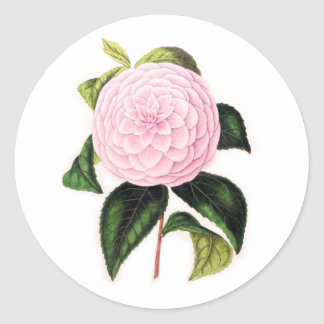 Pink Camellia Round Stickers