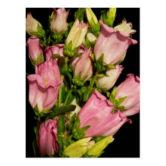 Pink Campanula Bouquet Post Cards