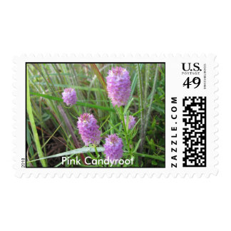 Pink Candyroot Postage