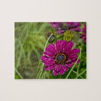 Pink Cape Daisy Flower Jigsaw Puzzle