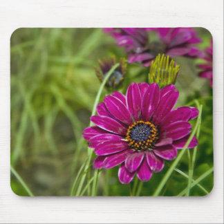 Pink Cape Daisy Flower mousemat Mousepads