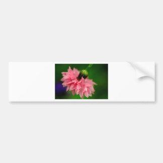 Pink Carnation Bumper Sticker