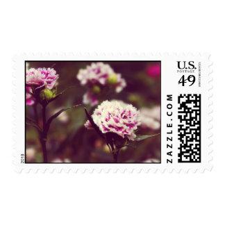 Pink Carnation flowers vintage lomo Postage