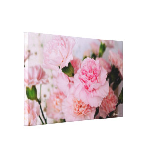 pink carnation flowers vintage style photography. canvas print