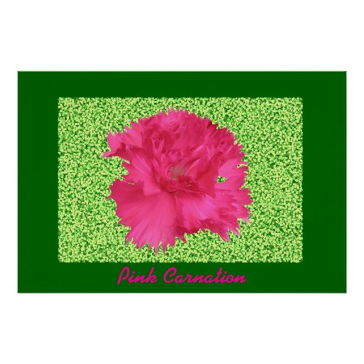 Pink Carnation Print
