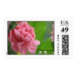 Pink Carnation Stamps