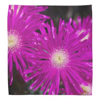 Pink Carpet Bandana